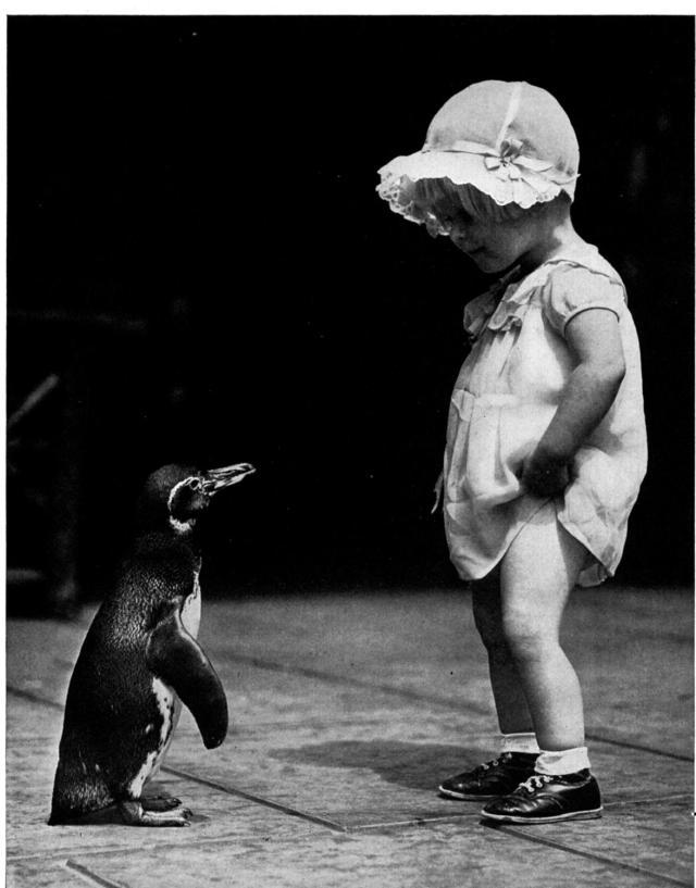 penguinbabybw